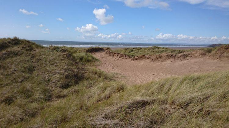 grassy tufts on the sand dunes with the sea stretching out beyond