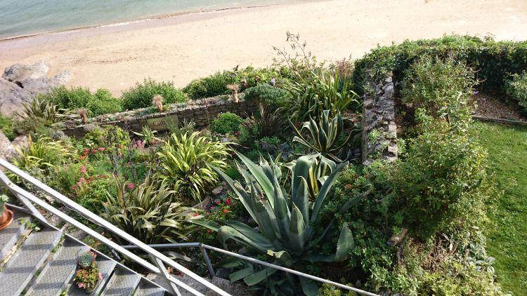 Various exotic plants grow in a garden on the cliffs overlooking the beach at Tenby