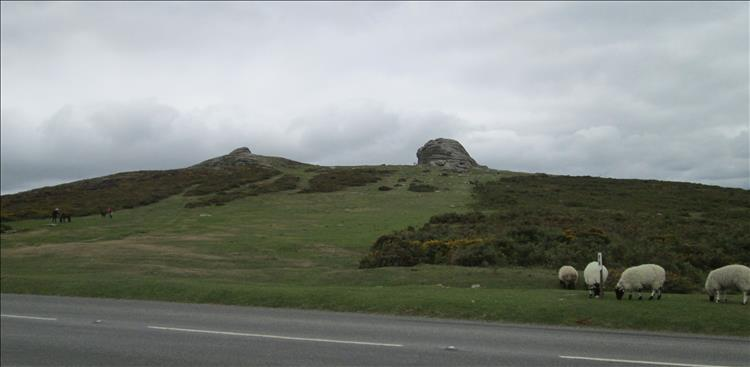 Haytor is the top of a rounded hill with a clump of rocks atop. Several sheep wander around