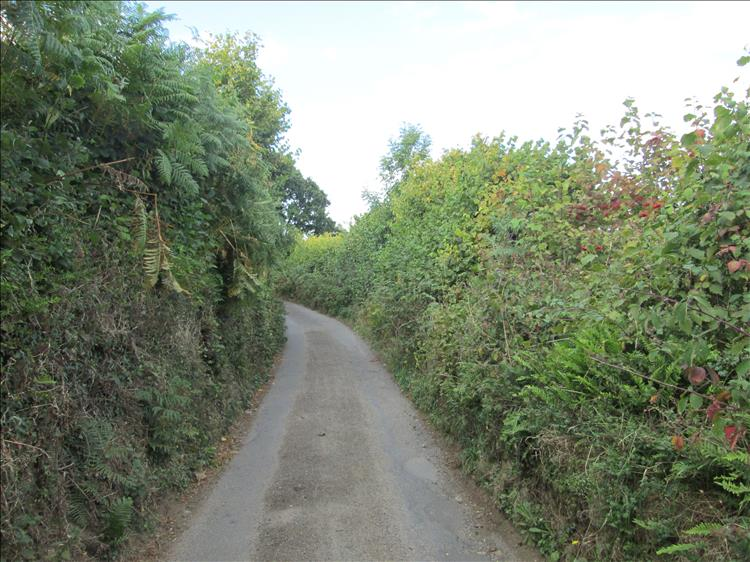 A narrow lane between hedges, fauna and trees on a dartmoor lane
