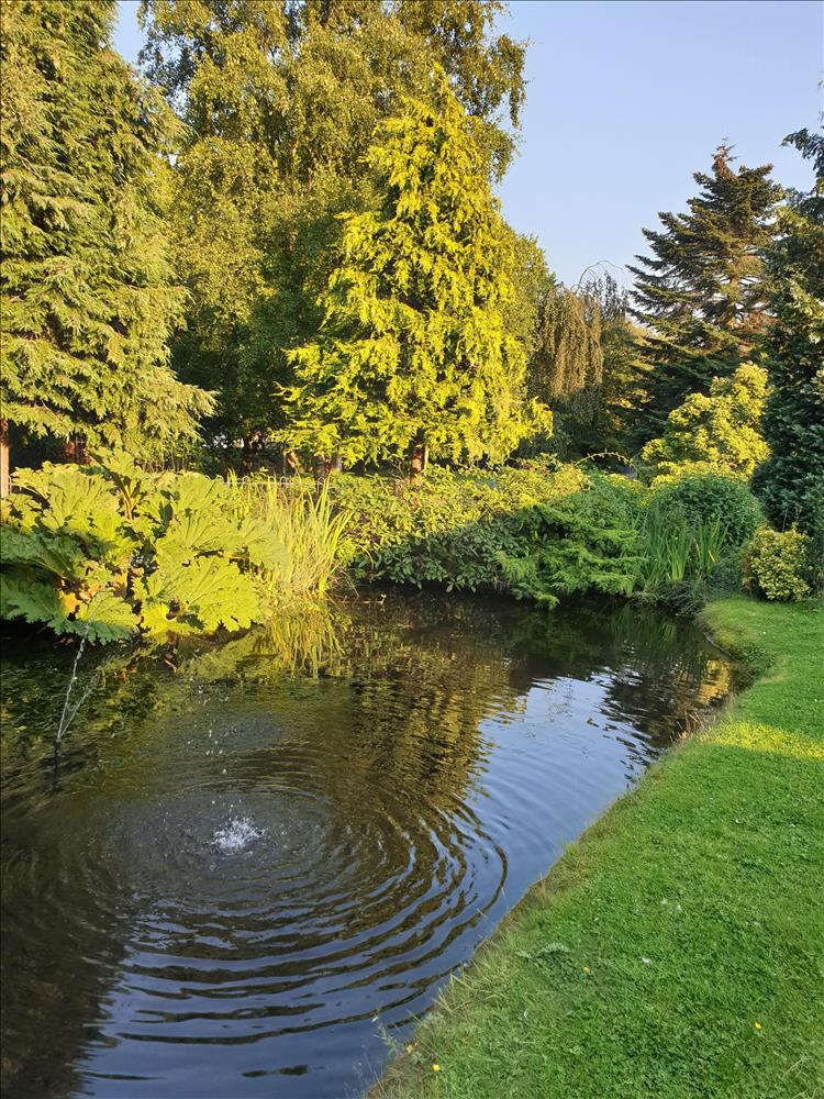 tall trees, a pleasant pond, grass and blue skies at the garden in Harrogate