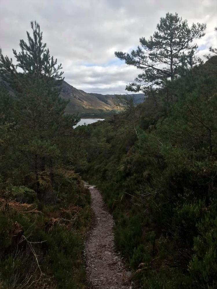 tall pines and a narrow path overlook a loch
