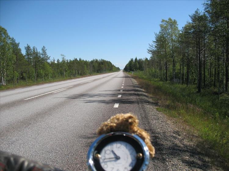 Looking out up a tree lined road we see a simple clock and teddy's furry head atop the speedo