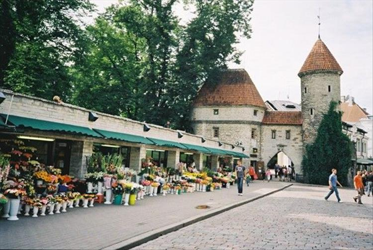 A row of street shops with flowers outside and a medieval building in Tallin