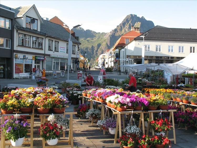 Bright vivid flower for sale in the town square, Scandinavian buildings and towering mountains in the distance