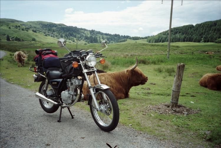 The small clean and tidy GN125 has a little light luggage and positioned in front of a highland cow on Mull