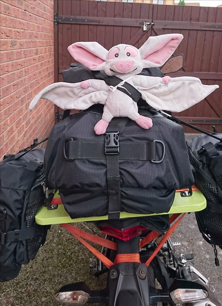 The stuffed toy Batty is a white bat and affixed to the back of the luggage on Sharon's Z250SL
