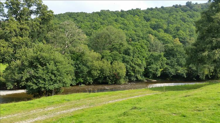 A gentle small river runs at the edge of the field and a tree covered hill behind