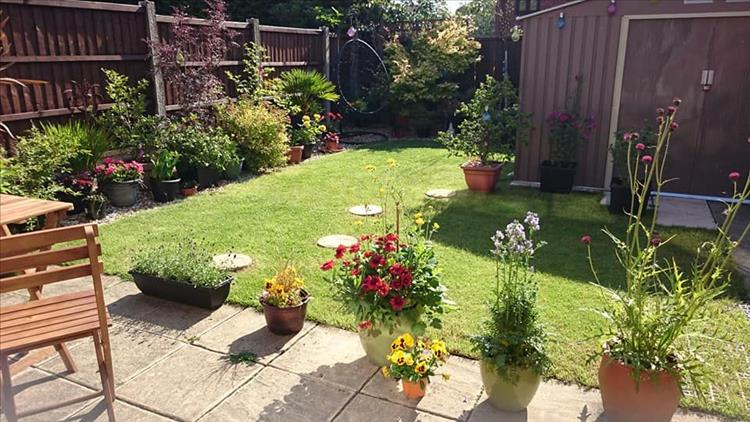 Sharon's garden is quite small but filled with plants and flowers and shrubs... and pots