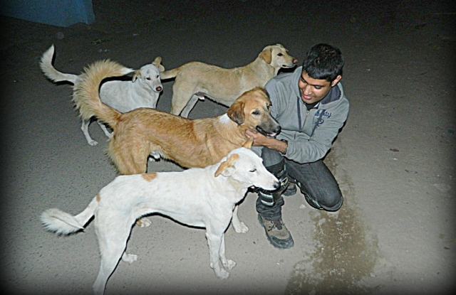 arjun frolicking with 5 dogs on a dark street in india
