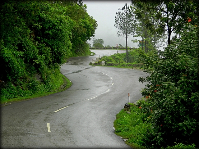 a wet road twisting through lush green bush and forest