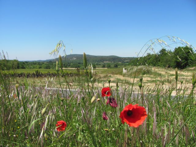 open gravel land with grass and poppies in the foreground
