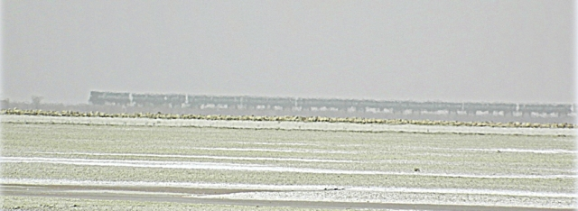 train on the horizon with sambhar lake in the foreground