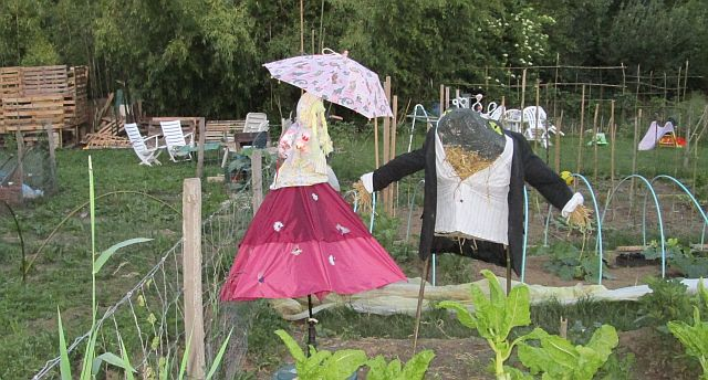 scruffy allotments and strange scarecrows