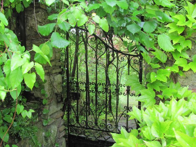 the iron gate filled with leaves and vines