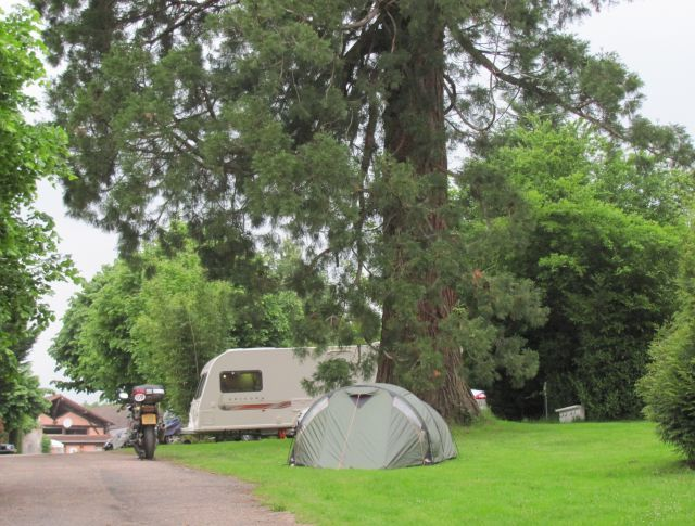 Our small tent and a caravan under a huge thick tall pine tree