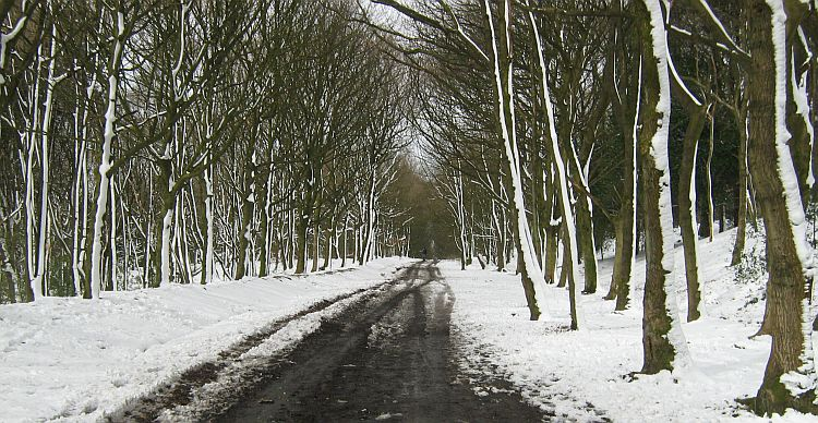 snow lies across an empty road and on the bare trees