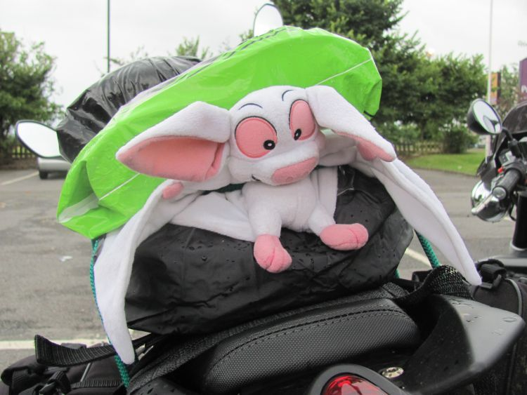 batty the cuddly toy bat looks forlorn and soaked attached to Sharon's motorcycle
