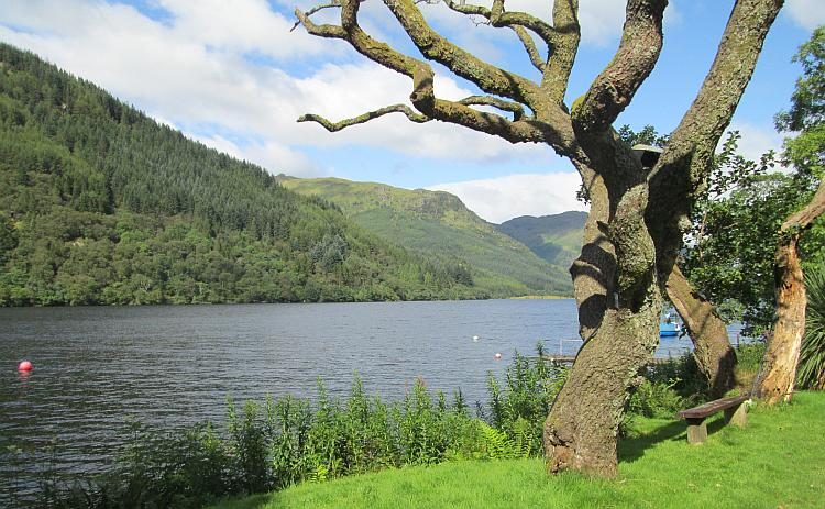 A twisted tree by a pretty tree lined loch. Loch Eck in the Highlands