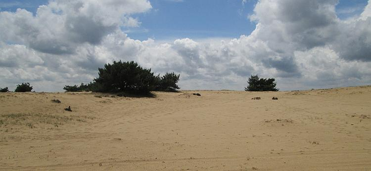 Green shrubs on sand dunes, in the imagination it could be a desert