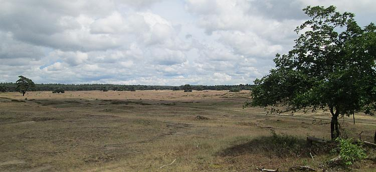 open hardy grassland in De Hoge Veluwe remind Ren of american or african savannah