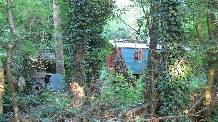A curious old gypsy style camping wagon amidst a tangle of trees and bushes