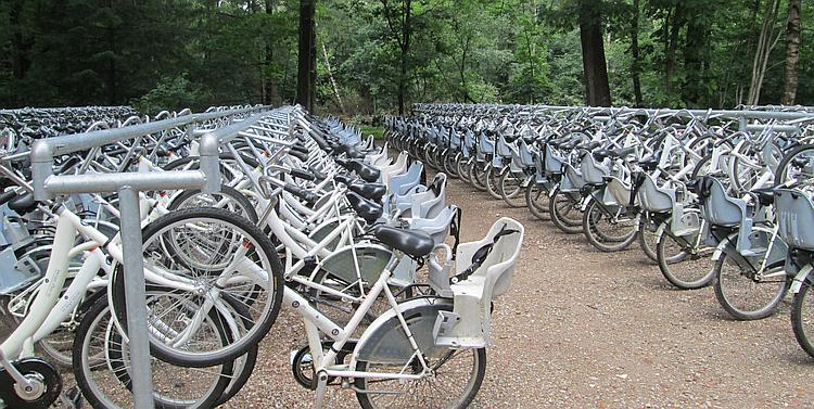 Hundreds of white bicycles on racks in the forest